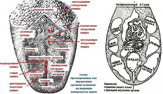 Неровные края языка (зубчатый язык) – фото, причины, лечение