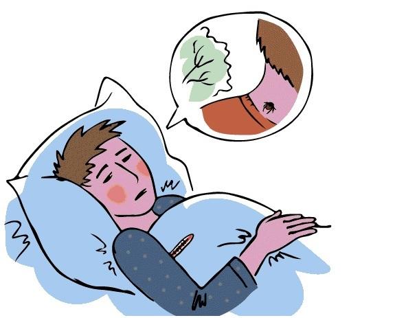 Укус клеща: симптомы у человека и через какое время проявляется
