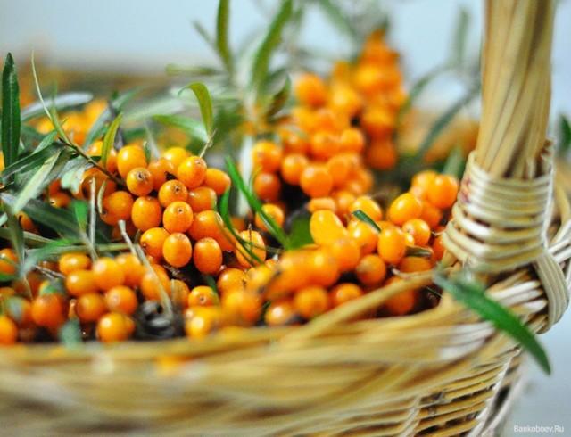 Волдыри, язвы на ягодицах – причины, фото, лечение