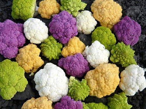 Капуста при диабете: можно ли при сахарном 2 и 1 типа квашенную, морскую, тушеную, цветную, соленую, свежую, пекинскую, белокочанную