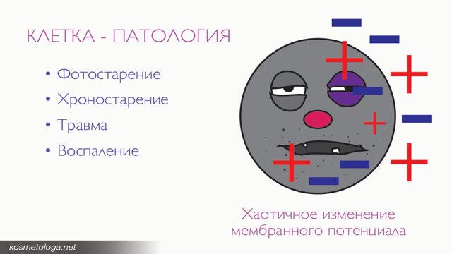 Биочип от отеков: отзывы, как приобрести, применять, нюансы