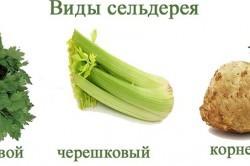 Сельдерей при диабете 2 и 1 типа, сахарном: можно ли корень, сок, польза и вред, как приготовить
