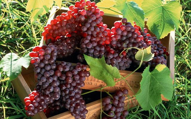 Виноград при диабете сахарном 2 типа: можно ли есть, польза и вред
