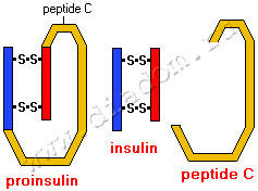 Крапива при диабете сахарном 2 типа: польза, нормы употребления, рецепты