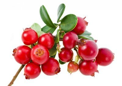 Брусника при диабете сахарном 2 и 1 типа: листья и ягоды, можно ли есть
